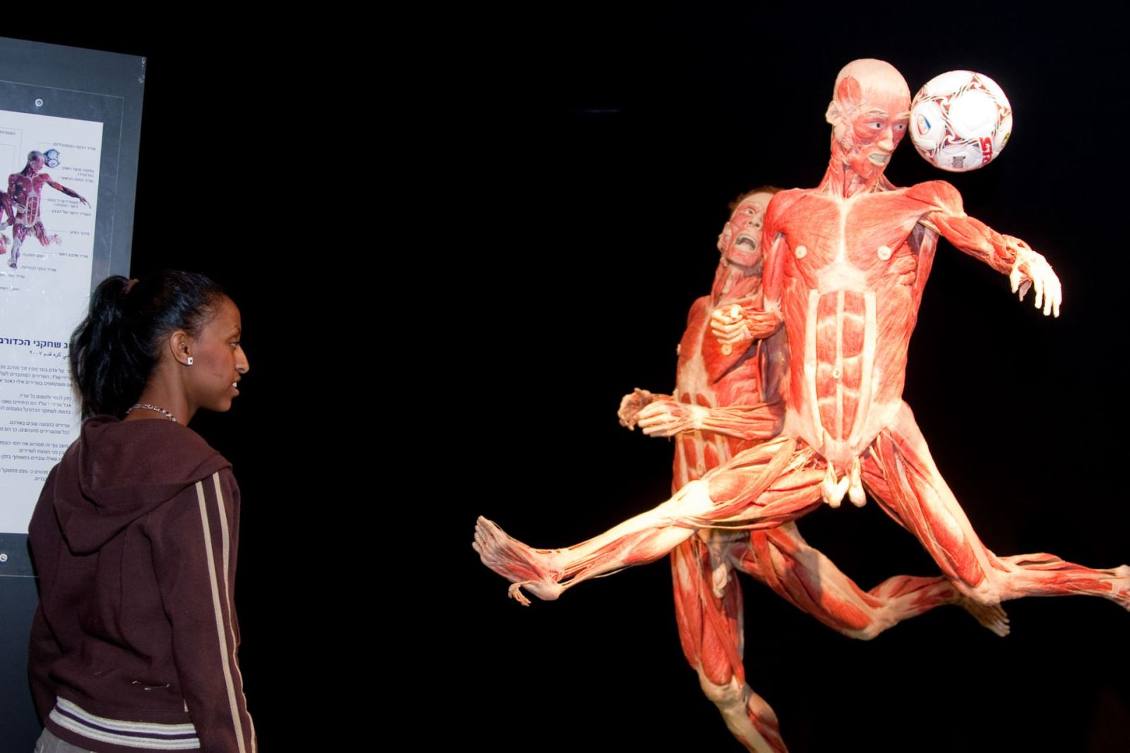 body world exhibit Artist defends his controversial exhibition on human corpses march 22: gunther von hagens, the german creator of body worlds defends his.